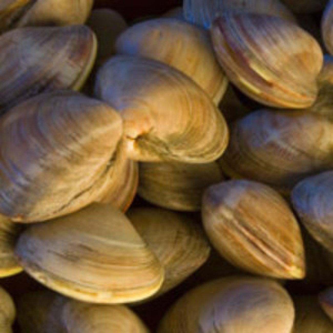 Steamed Soft-Shell Clams